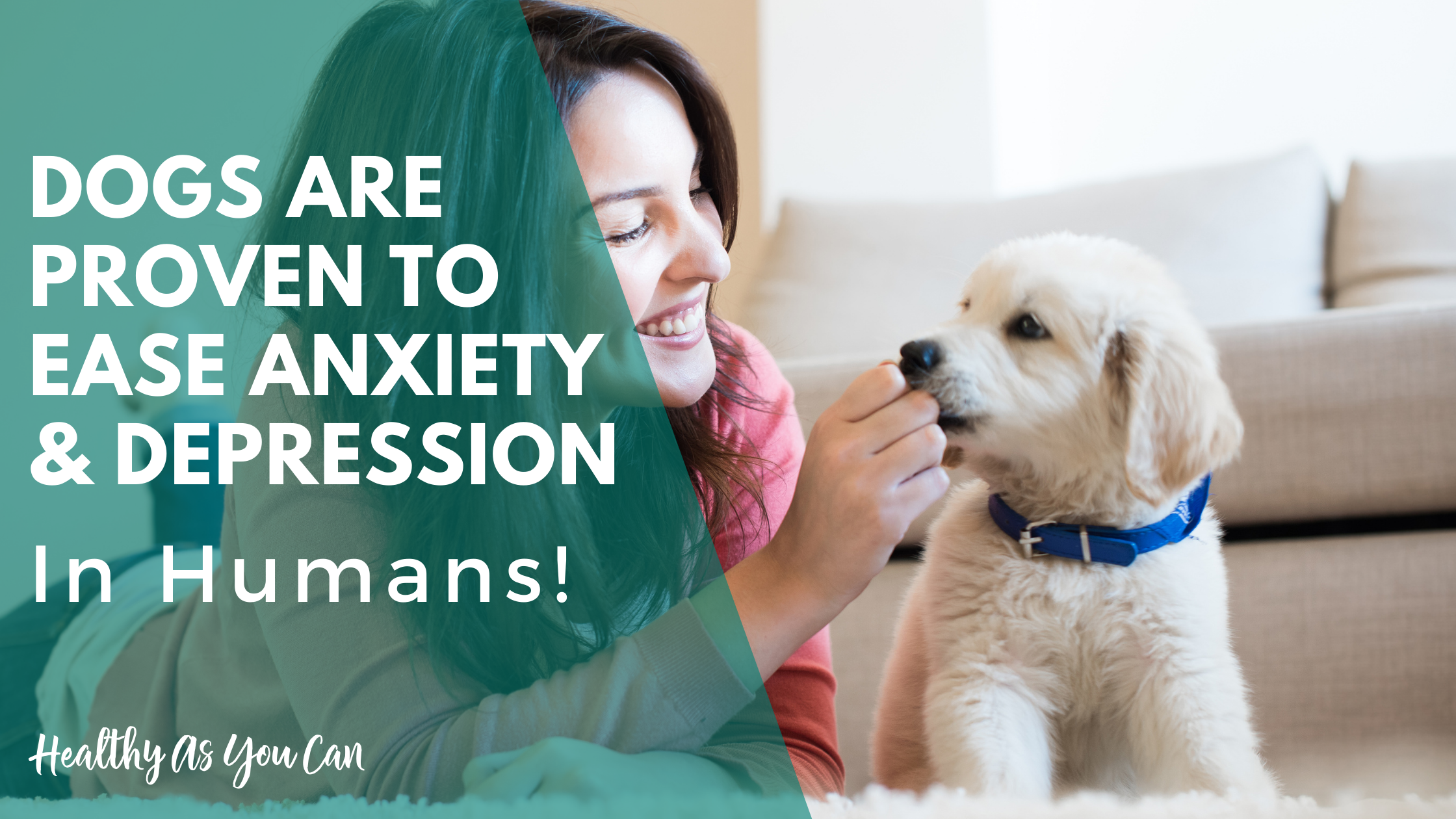 pets help lower your anxiety